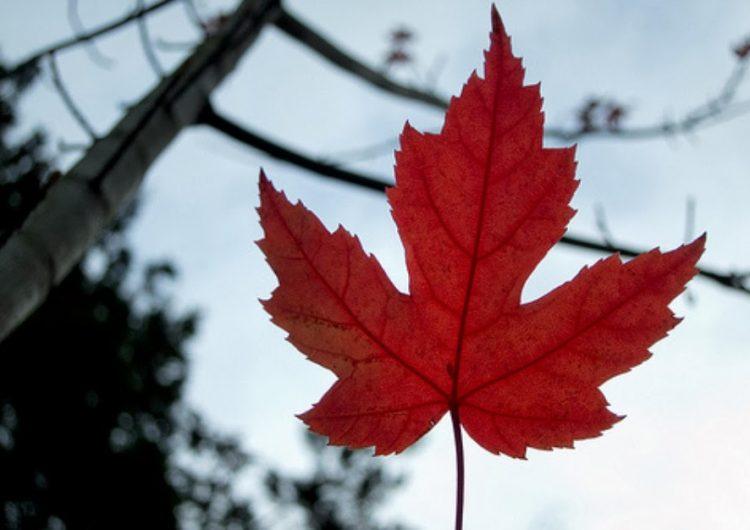Los canadienses siguen apoyando la inmigración según encuesta